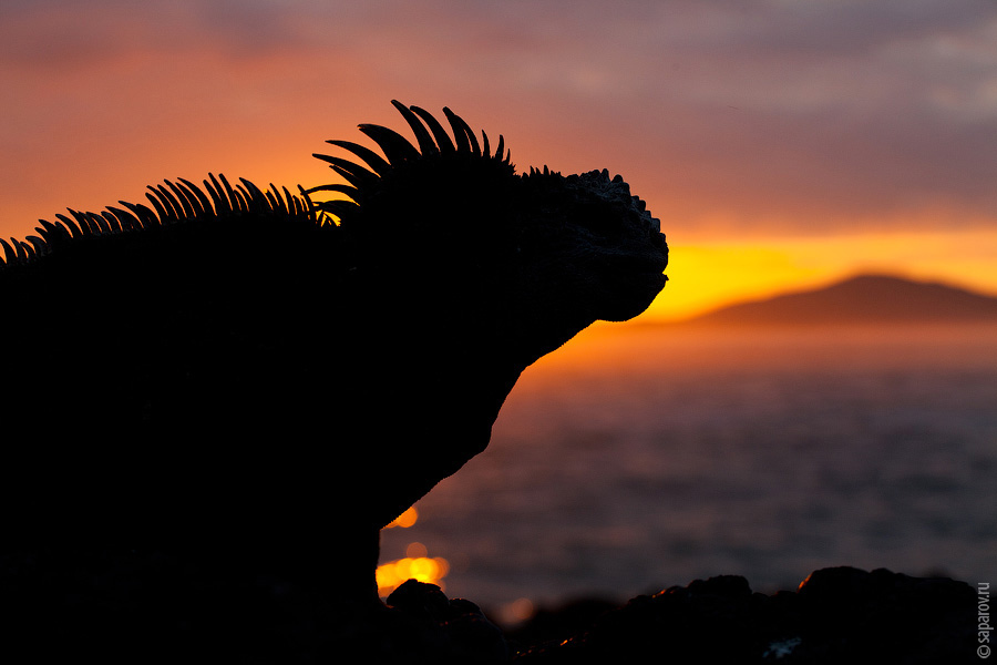 Эквадор. Галапагосские острова